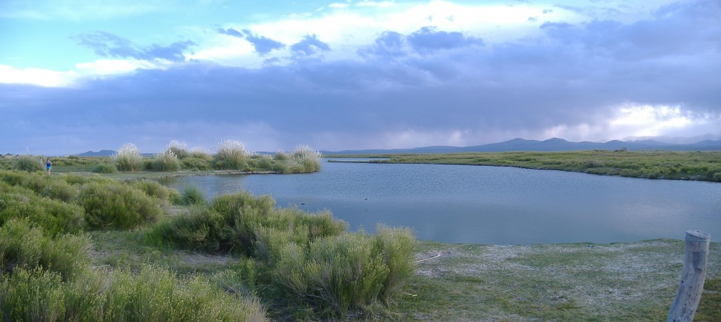 The Laguna de Llancanelo