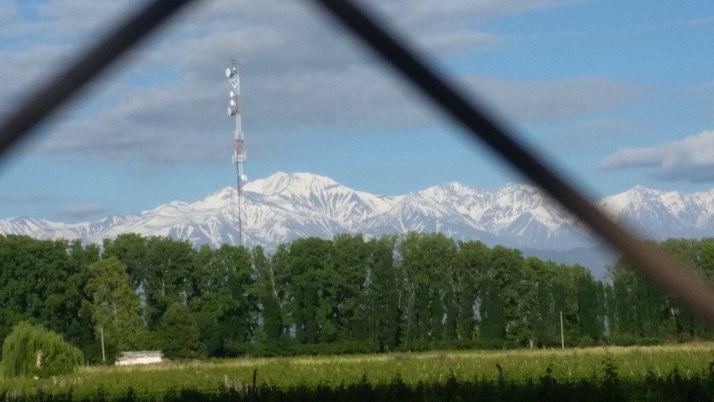 I had a beautiful view of the Andes across the vineyards from my camping spot.